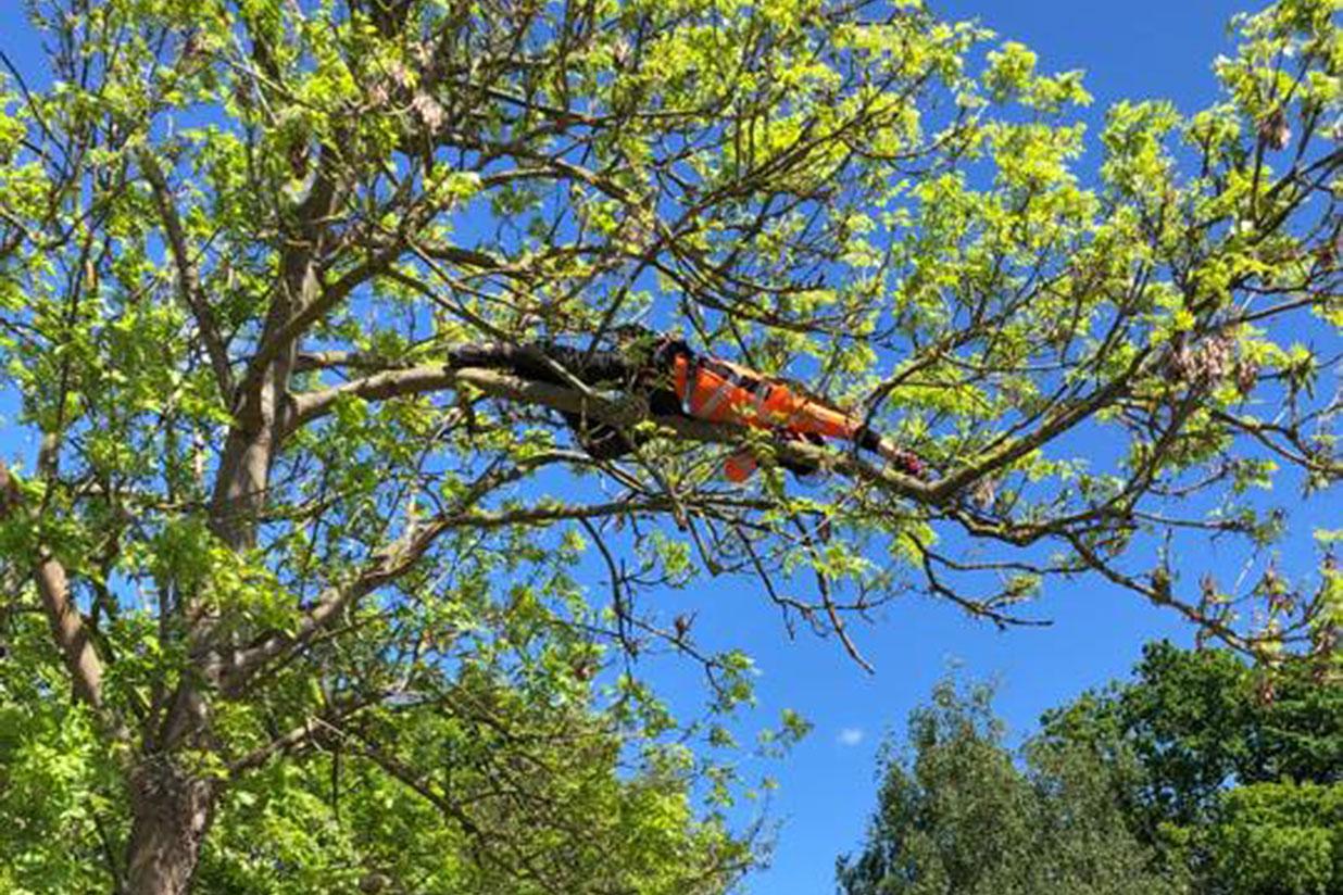 arborist-climber-job-news