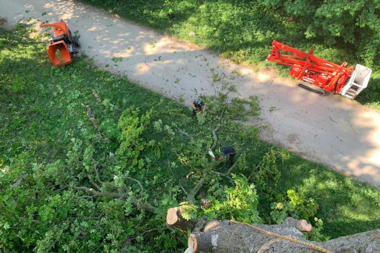 choosing your tree surgeon