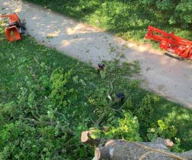 choosing your tree surgeon