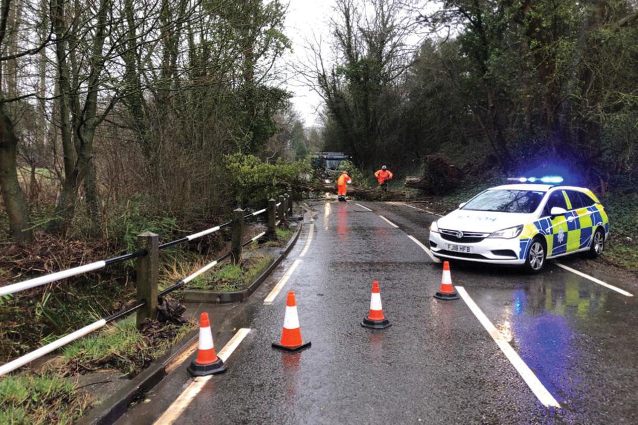 emergency tree services nottinghamshire